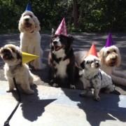 birthday group