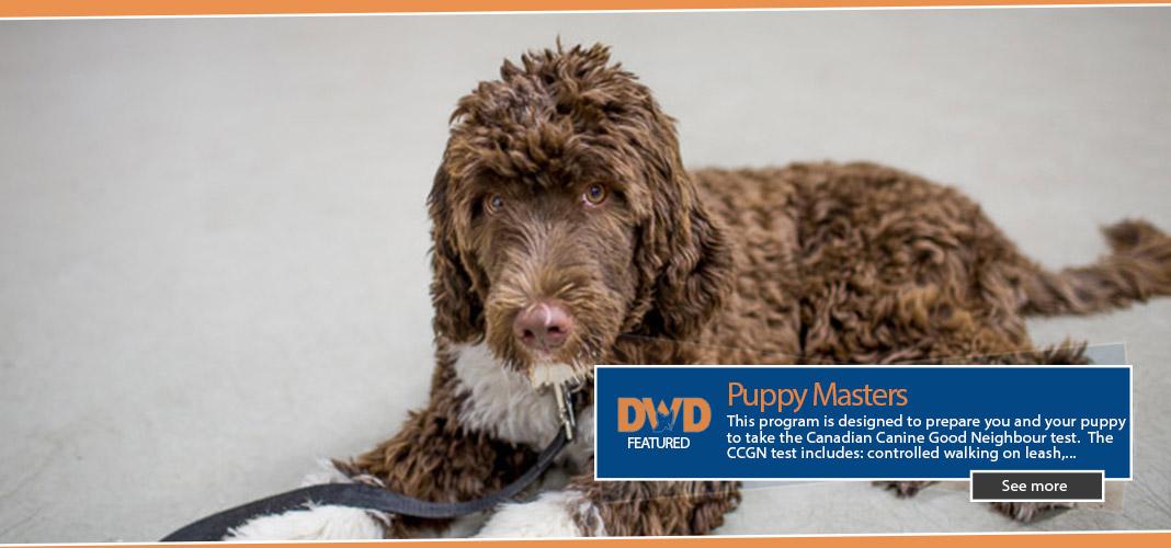 dwd-puppymasterSplash