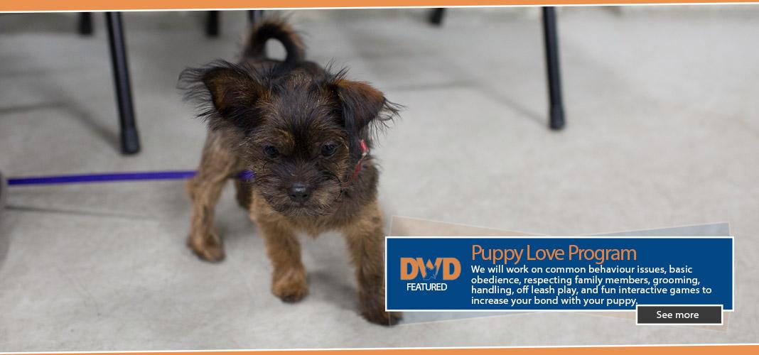 dwd-puppyloveSplash
